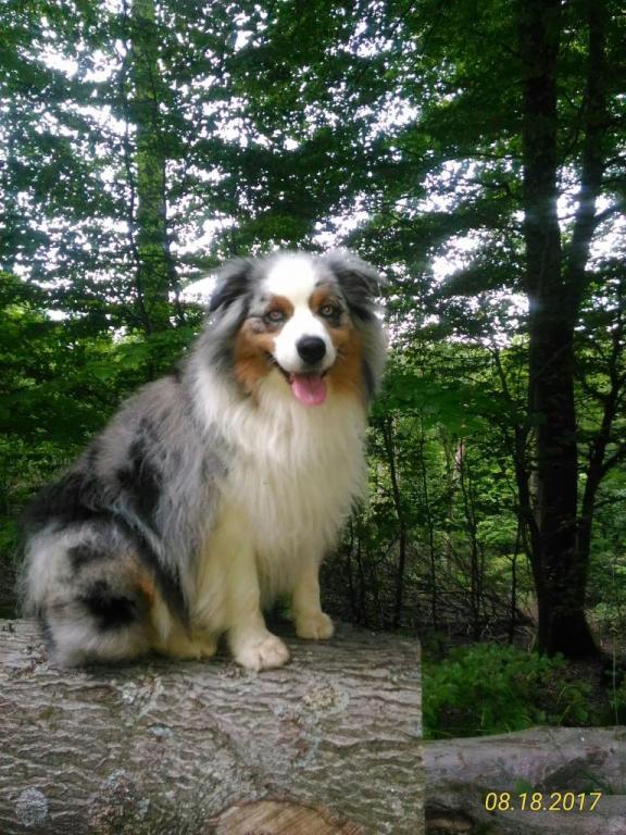 Aussie, le chien de Chantal