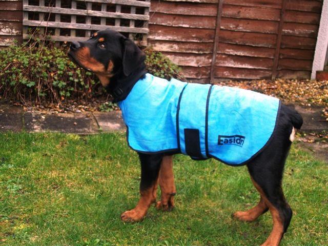 Chien Rottweiler avec un manteau rafraîchissant