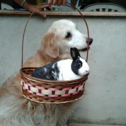 Daisy, chienne de Janos et son copain Lucky le lapin
