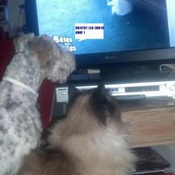 Foxtrot'h et son copain le chat