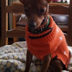 Guizmo, 12 mois avec son joli pull orange
