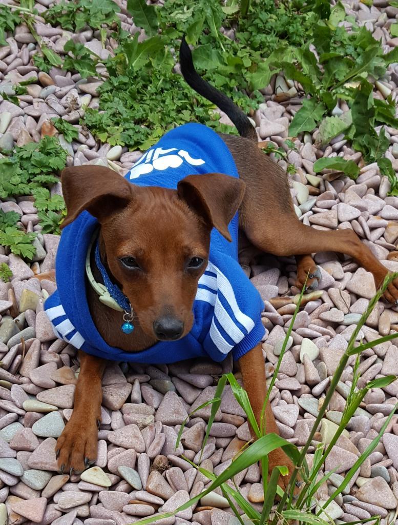 Guizmo avec son adorable petit pull bleu
