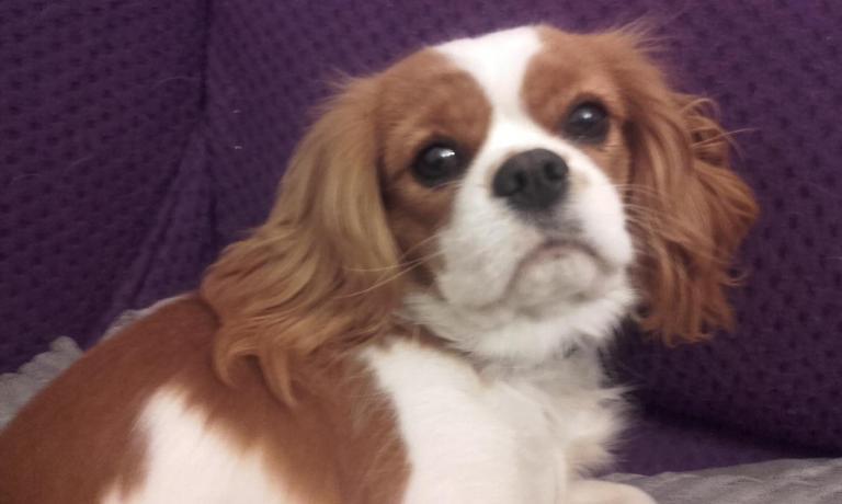 Laika, la petite chienne de Blandine à 9 mois