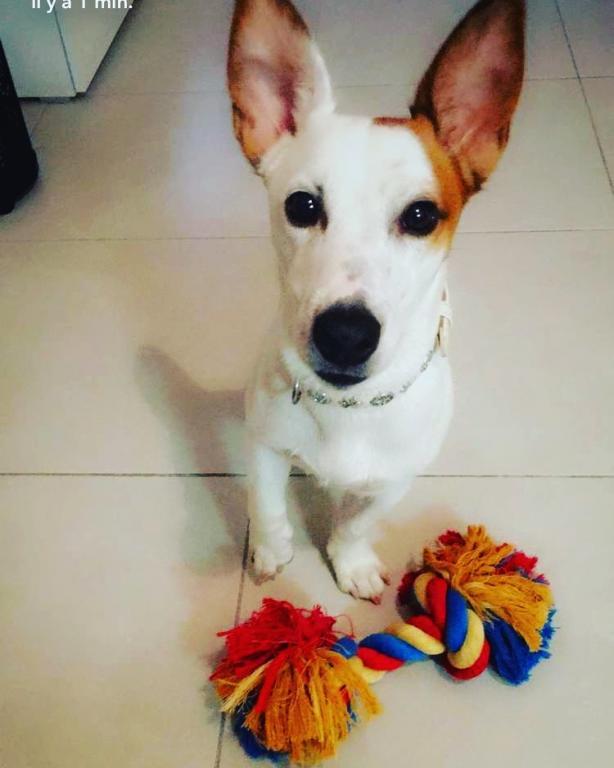 Levis, 1an avec son jouet
