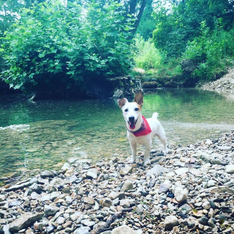 Levis avec son joli bandana au bord d'une rivière