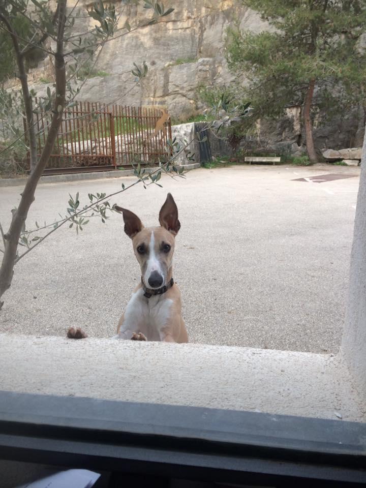 Limbo, 2 ans qui regarde par la fenêtre