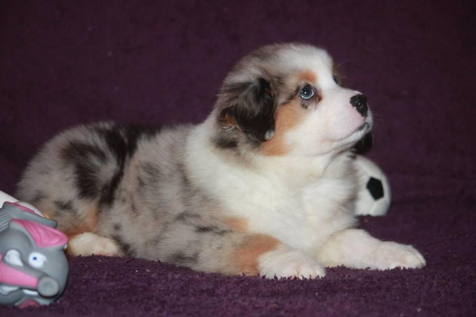 Luna, 3 mois, la petite chienne de Sarah
