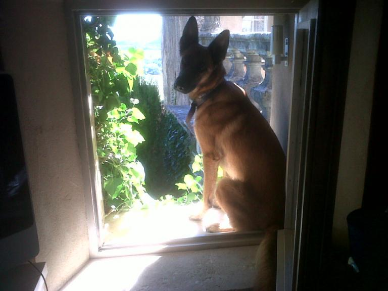 Luna, la chienne de Marie à la fenêtre