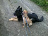 Madmwa a 3 mois et Chouffe son copain