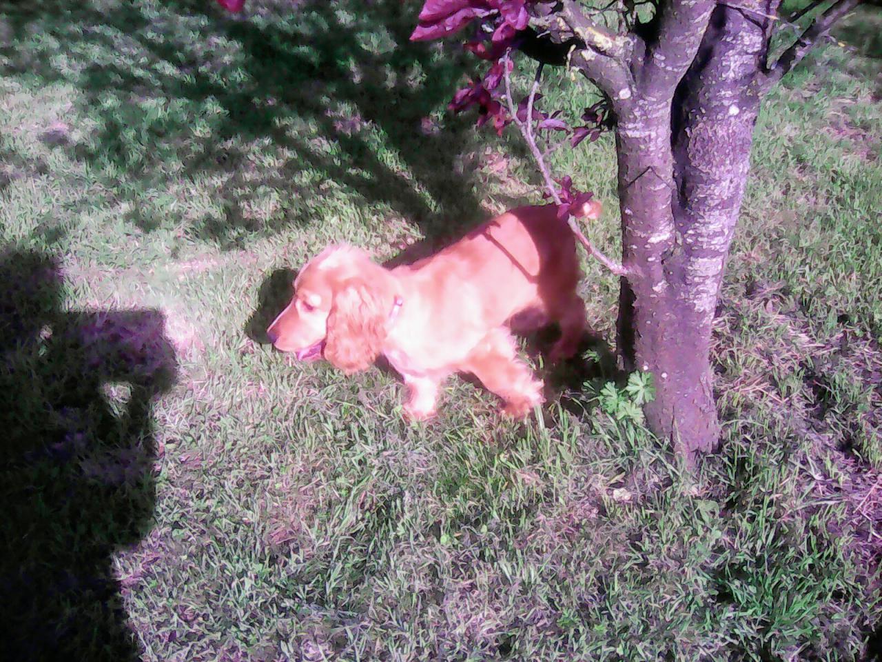 Marcel dans le jardin
