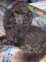 Melrose, la chienne de Valérie à 1 an et demi