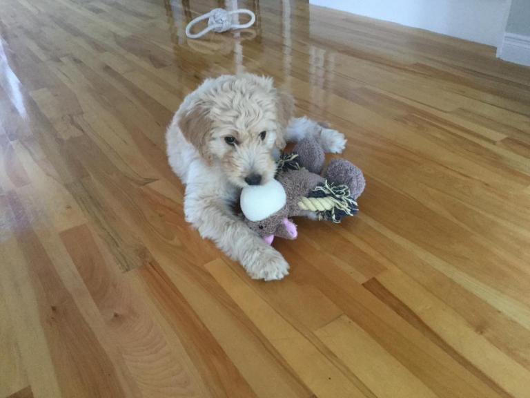 Molly, la petite de Sonia à 3 mois
