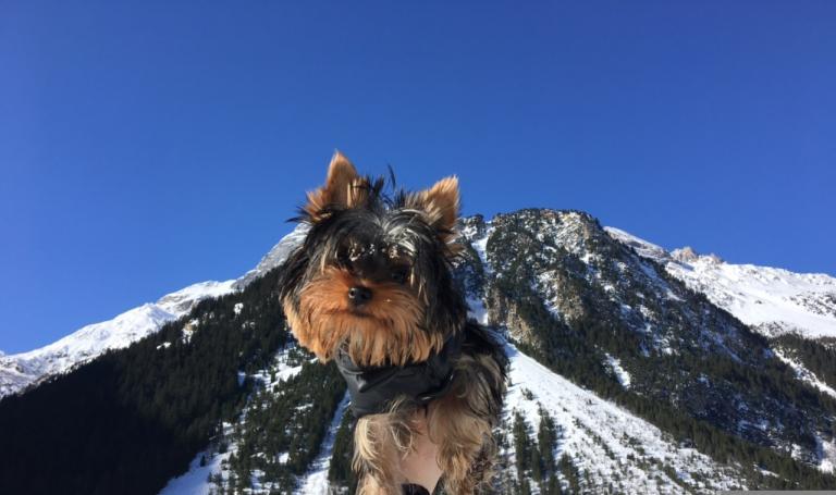 Mya à la montagne