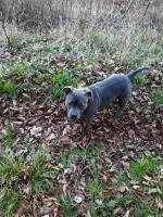 Oaxès qui se promène en forêt