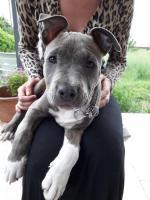 Ohio 2 mois et demi, le chien de Anaïs