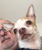 Rotchild dit Roxy 5ans, le Chihuahua de Didier