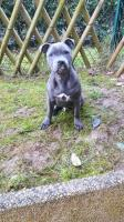 Tayson, chien de Sophia qui a bien grandi