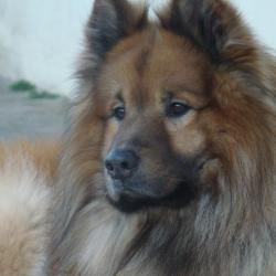 Ufanou, le chien de Nadine