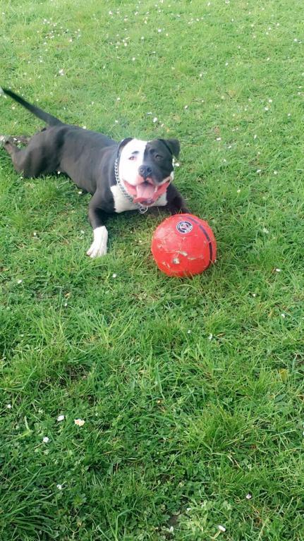 Zango avec son gros ballon rouge