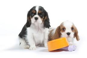 gamelles pour chiens