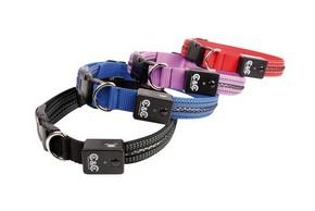 4 colliers lumineux pour chien