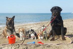 7 chiens a la plage