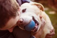Activite de jeux avec son chien