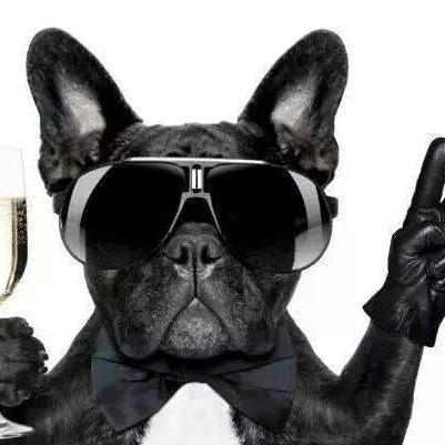 Bouledogue francais luxe lunette