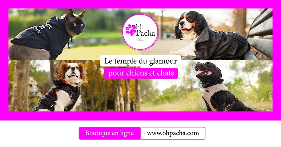 Boutique ohpacha 1511