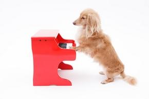 Bruit jouet chien