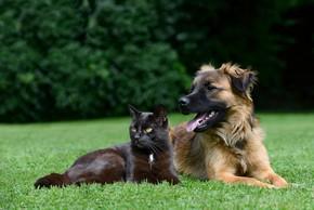 Chat et chien couches sur l herbe