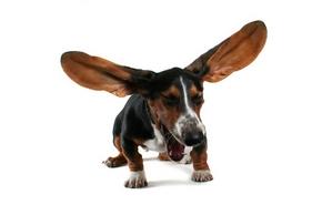 """Résultat de recherche d'images pour """"chien"""""""