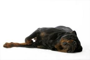 Dresser votre chien à faire le mort avec Mouss