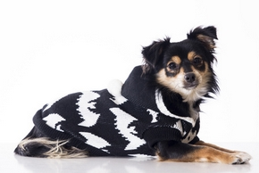 conseils do tag vetements chien