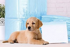 Chiot avec des tapis absorbants