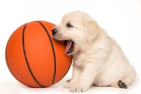 Choisir jouet chien