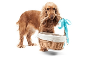 Choisir panier chien