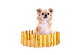 Cloture chien 2