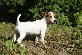 Collier dressage petit chien