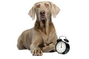 Combien temps jouer chien