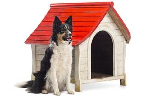 Comment choisir niche chien