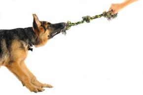 Comment jouer chien