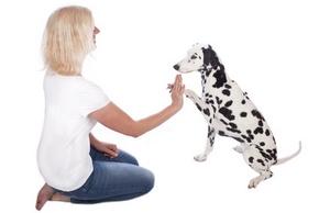 Comportement du chien