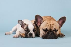 Croquettes chiot ou croquettes chien