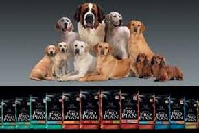 Croquettes proplan chien