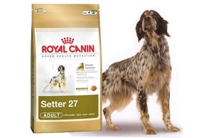 Croquettes royal canin chien