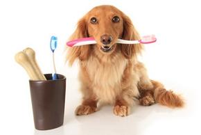 Dentifrice chien
