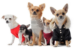 Different vetement chien