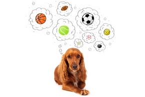 Differents jouets chien