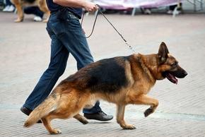 Educateur chien